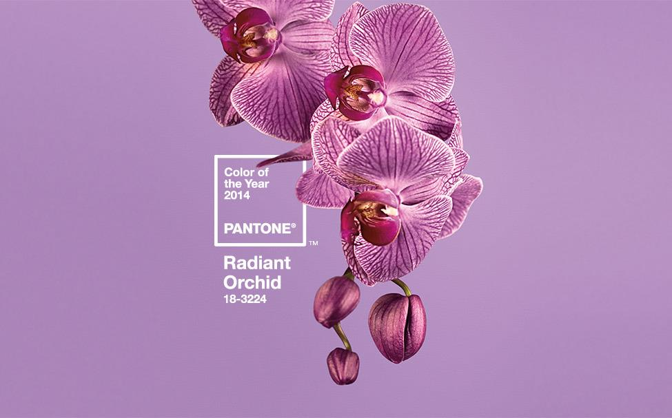 Wedding Theme of 2014: Radiant Orchid